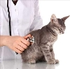 Ветеринарные клиники в Волчанске
